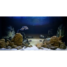 Панорамний акваріумний фон